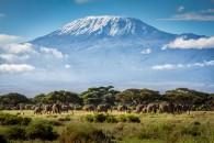 Kileys Karpets Climb Mt Kilimanjaro
